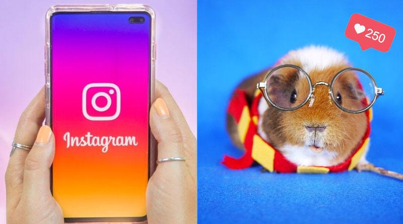 Популярное в Instagram